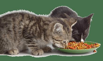 Защо някои котки ядат легнали?