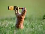 """""""И да паднем, и да бием, пак ще се напи-и-е-ем"""""""