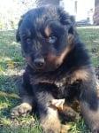 Моето куче :)