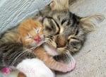 Да се събудиш до мама
