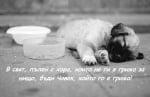 Да те е грижа за другите същества