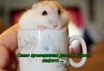 Едно късо кафе, моля!
