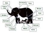 Колко животни има на снимката? - отговор на загадката