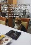 Дилемата между разума и сърцето през кучешки поглед
