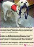 3 - 9 август: Международна седмица на кучетата асистенти
