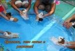 Морски свинчета на SPA-процедура