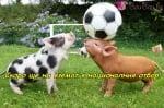 На тренировката по футбол
