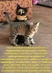 29 октомври - Национален ден на котката