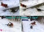 Снежните игри на Томи и Джони