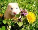 Сред пролетни цветя