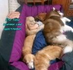 Терапевтично легло - лекува всичко с любов!