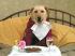 Как се храни кучето