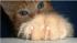 Котка си показва ноктите