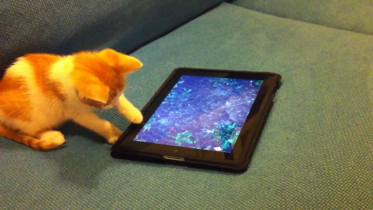 Котенце си играе на iPad