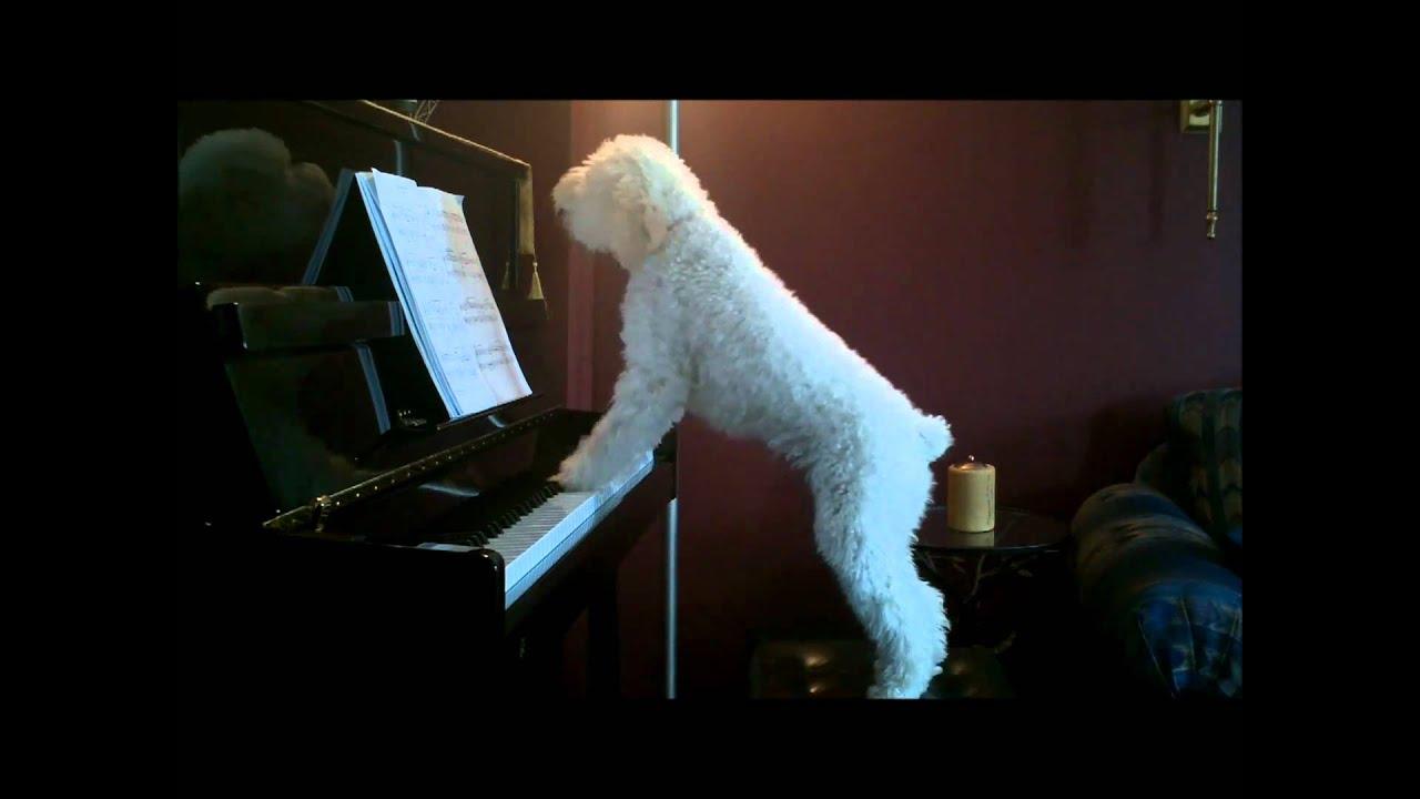 Куче - свири и пее на пиано