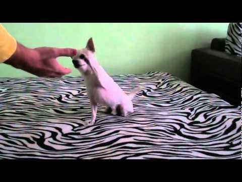 Кучето на Метин Енимехмедов