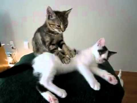 Котешки масаж
