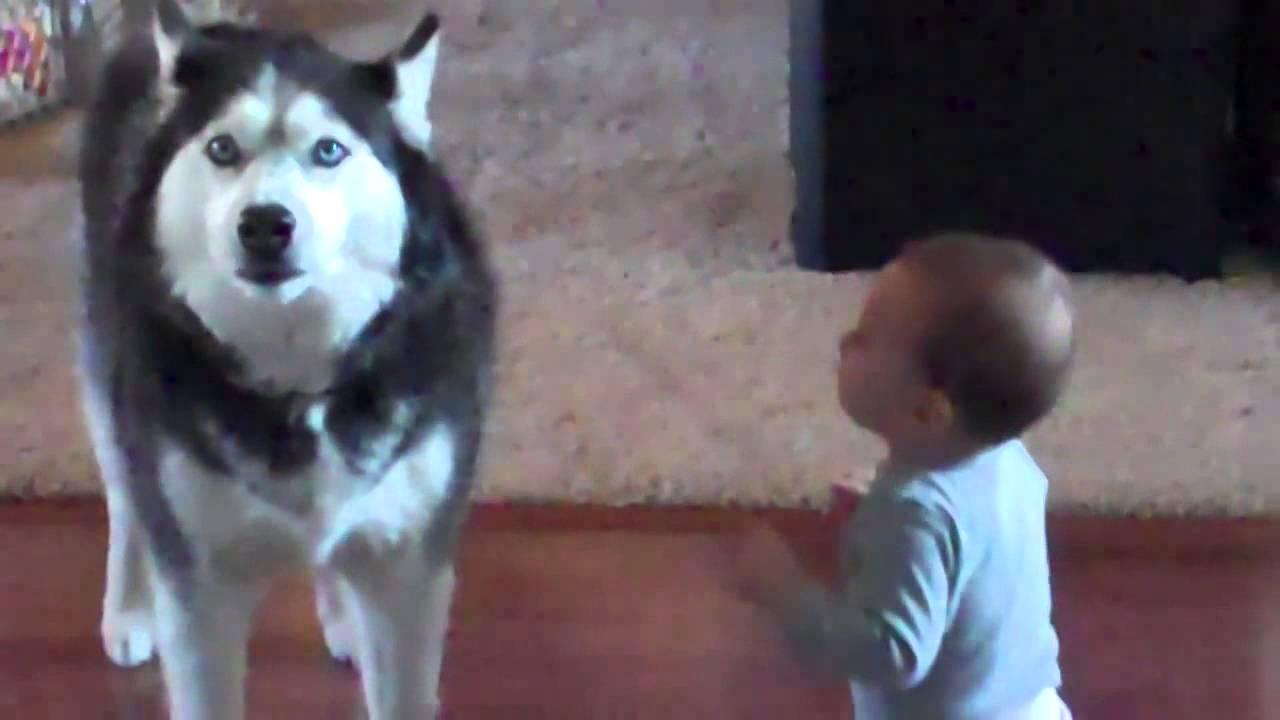 Куче и бебе си говорят