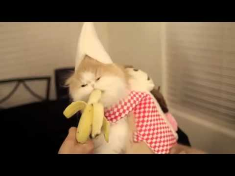 Коте си хапва банан