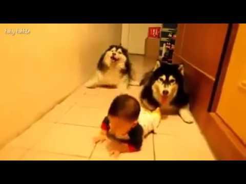 Ето как се пълзи по кучешки и бебешки