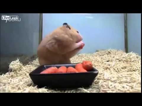 """Ето така се правят запаси - 5 моркова """"изчезват"""" за секунди"""