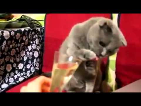 Кой каза, че котките не пият шампанско?