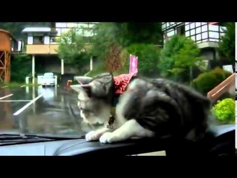 Котенце се забавлява по уникален начин с чистачки за кола