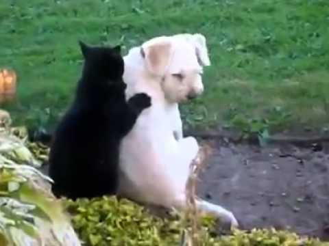 Котка масажира куче като истински професионалист