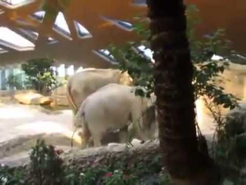 Семейство слонове спасяват по уникален начин своето слонче