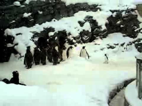 Най - щастливия пингвин на света