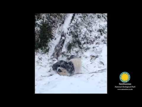 Черно-бяла снежна игра