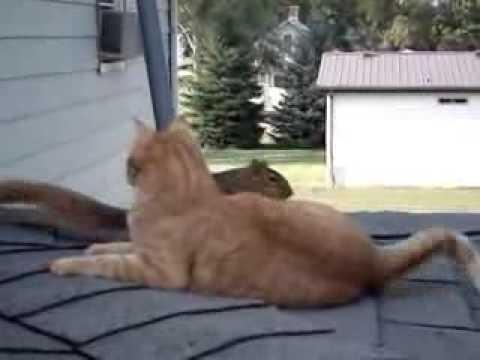 Катеричка идва сред хората, за да си поиграе с домашната им котка
