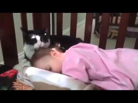 """Котка се опитва да """"изкъпе"""" бебе"""