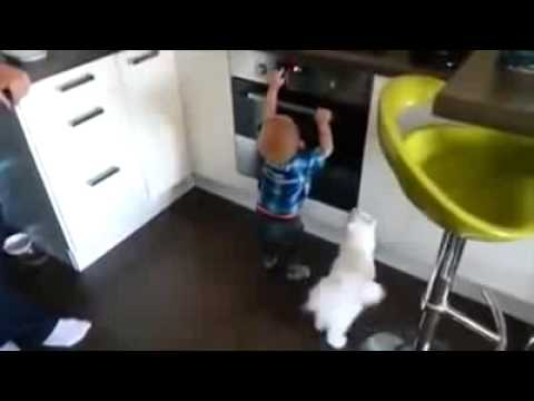 Умна котка предпазва дете от изгаряне в кухнята