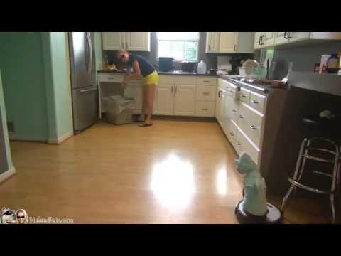 Невиждано - котка в костюм на акула чисти кухнята с прахосмукачка