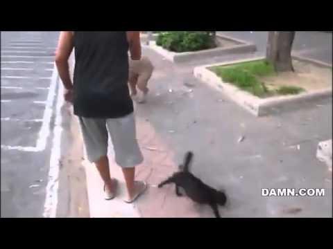 Ето какво се случва с куче, което закача малкото на една котка