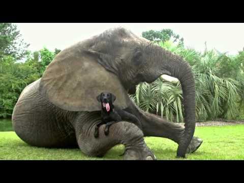 Няма да се изморите да гледате това видео - невероятна приятелска любов между различни животни
