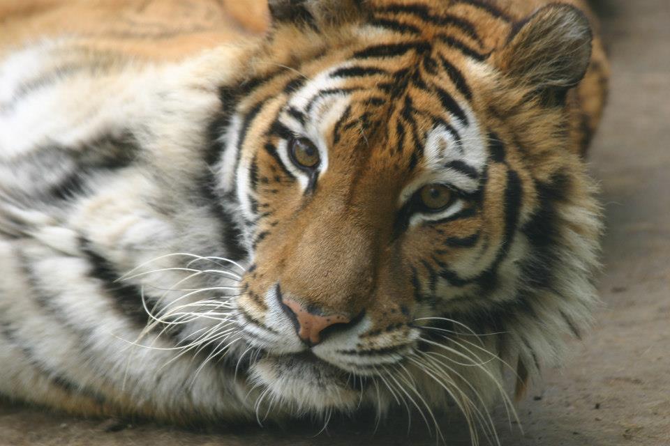 Зоопарк  - Ловеч