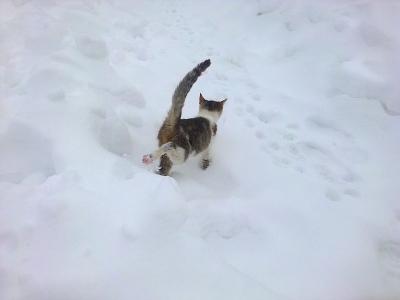 Моята котка