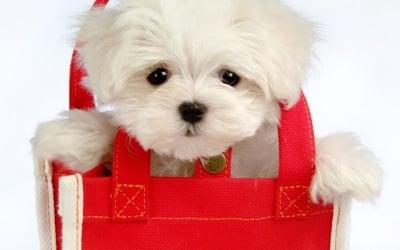 Сладурче в чанта