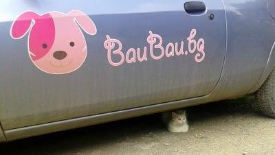 Животните са с БауБау навсякъде ♥