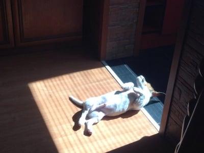 Тоти се препича на слънце