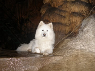 Балто пещерняк