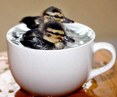 Сладури в чашка