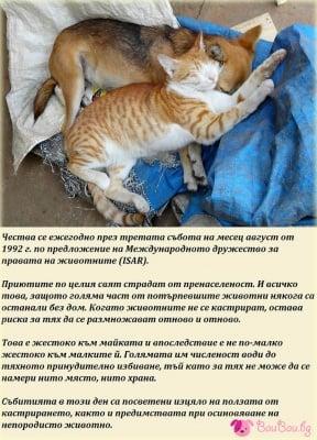 16 август - Международен ден на бездомните животни