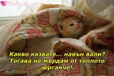 Сладък сънливко
