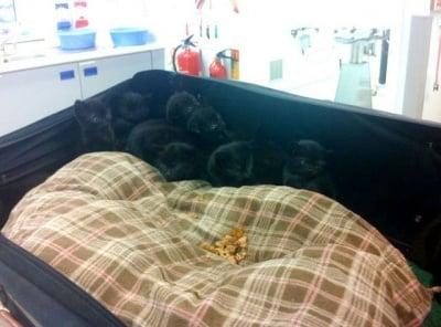 15 малки котенца,намерени в куфар