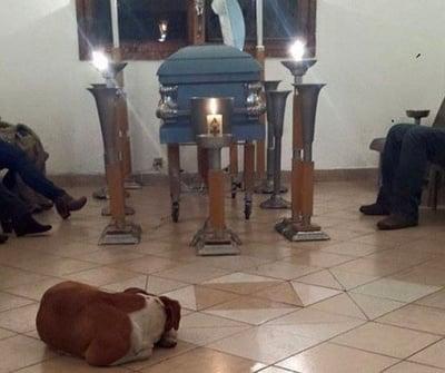 Бездомни кучета на погребението на жена