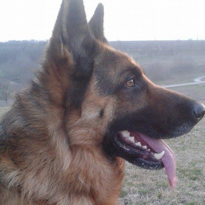 Най-умното, добро и любвеобвилно куче Рекс !!!