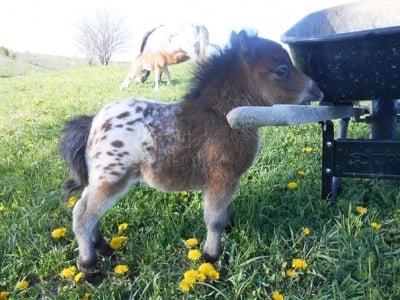 Пони с количка